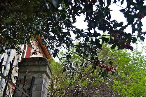 Villa Daviel - arbres