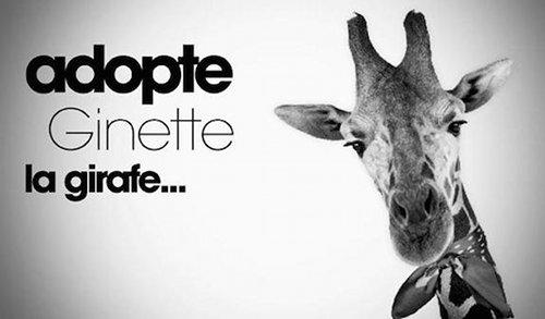 Ginette la girafe