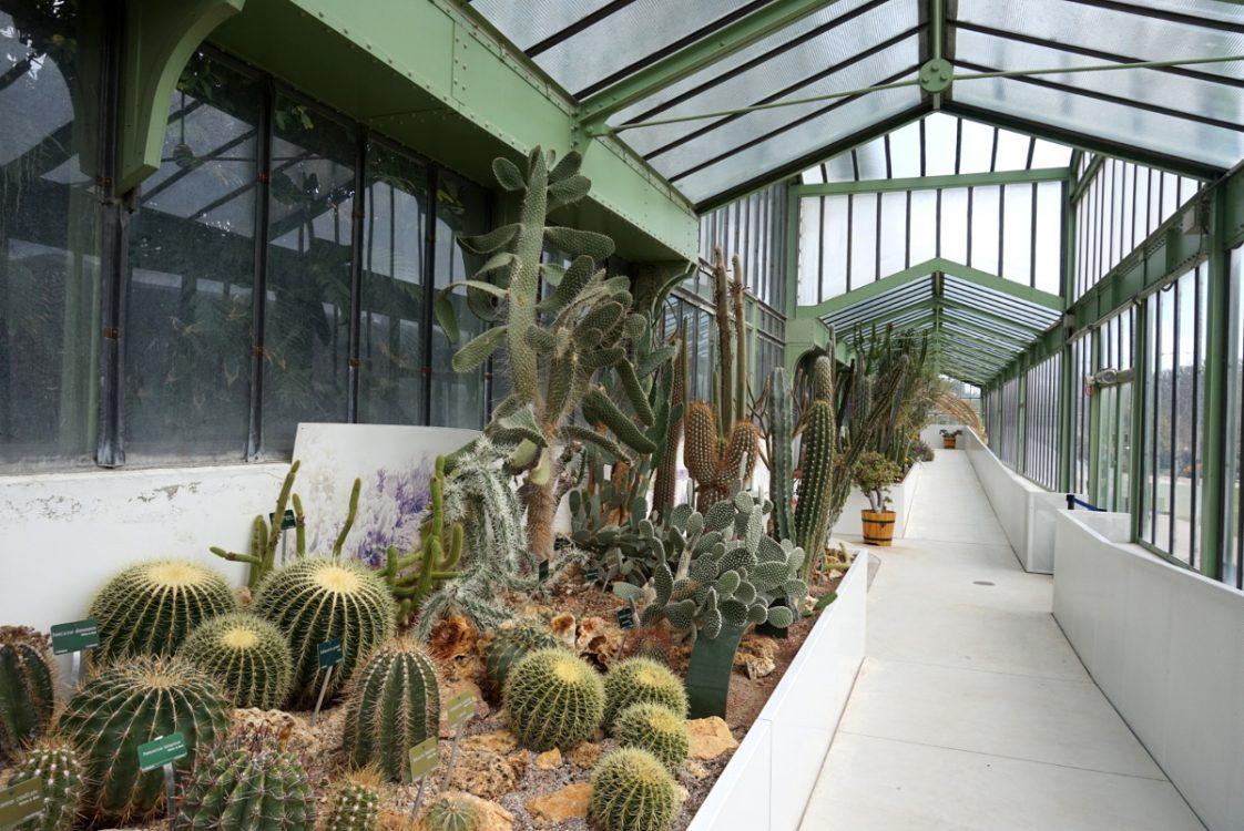 Balade Tropicale Sous Les Grandes Serres Du Jardin Des Plantes
